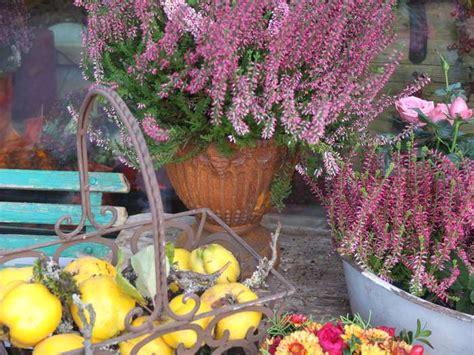 blumen schwabing die blume inh schlosser floristik in m 252 nchen