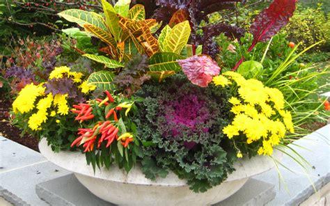 fall container garden ideas 20 fabulous fall container garden ideas garden club