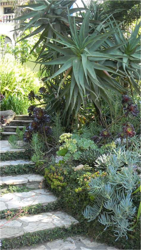 small yard landscaping ideas 5682 102 best succulent and cacti landscape images on