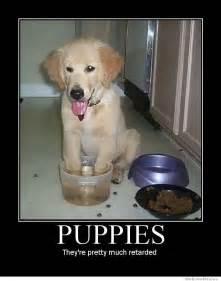 New Dog Meme - 25 funny dog memes weknowmemes