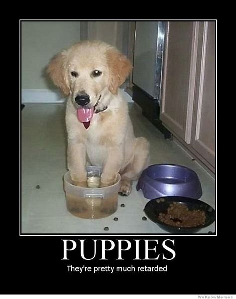 how much are puppies puppies they re pretty much retarded weknowmemes