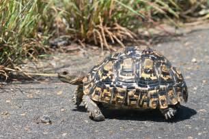 wildlife den south african wildlife photography