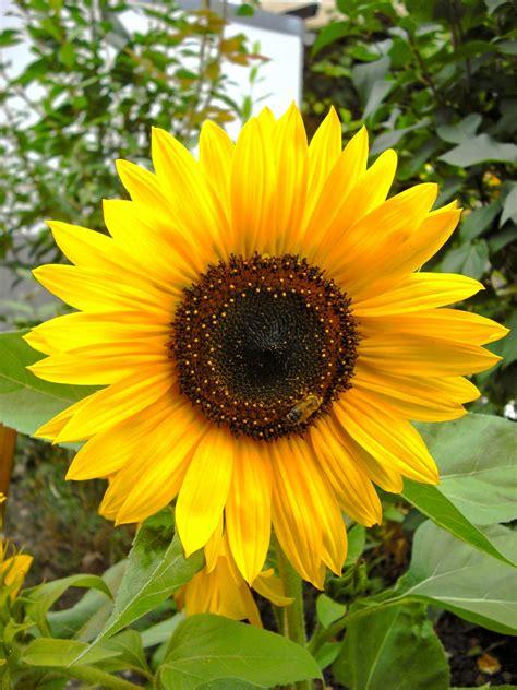 fiore botanica immagini co fiore petalo botanica giallo