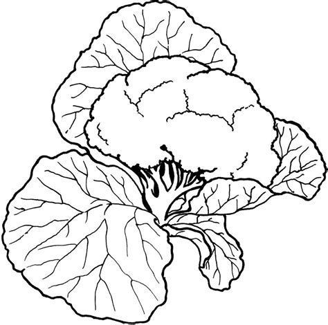 printable coloring pages vegetables vegetable coloring pages best coloring pages for kids
