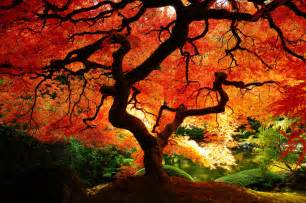 fall fantasy every imaginable color from god s