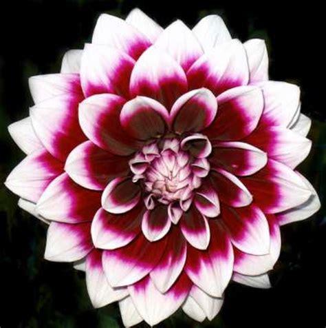 imagenes flores salvajes mis im 225 genes flores salvajes