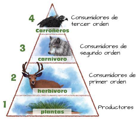 cadenas alimentarias piramides ecologicas pir 225 mides ecol 243 gicas portal acad 233 mico del cch