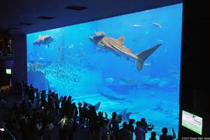 Aquarium (?????????), ?Kuroshio Aquarium