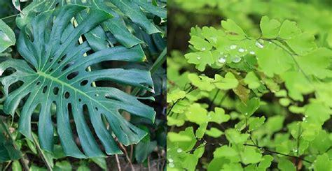 tanaman  ruangan  menjaga kesehatan dokter sehat