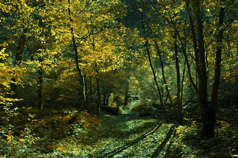 forest glade sylvan glade magic forest conceptual photography by