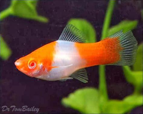 Udang Hias N Pemakan Algae Cherry gna get nature aquascape ikan aquascape