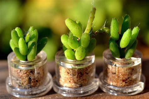 Garage Storage Design Software mini cactus terrarium keychains the green head
