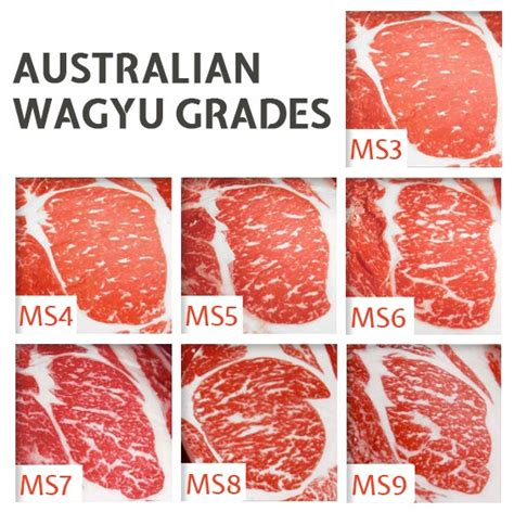 wagyu steak marbling wagyu beef grading and marble scores guide steaks and