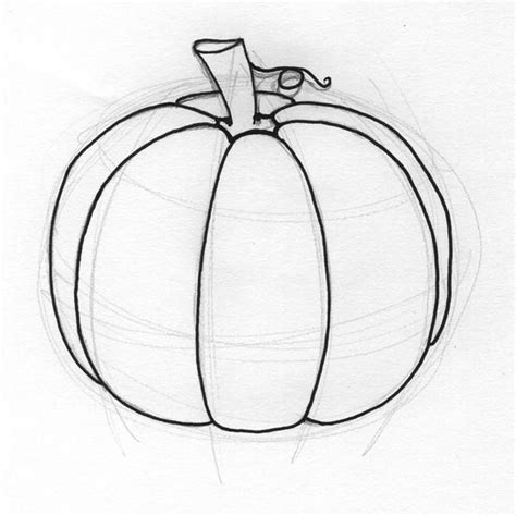 pumpkin sketches pumpkins adobe illustrator