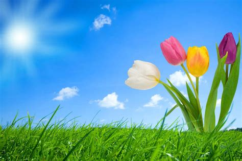 win with flower nature flower background pictures wallpaper sportstle