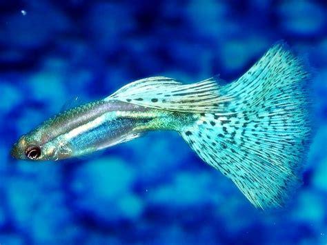Pembersih Akuarium Ikan Pembersih Aquascape Akuarium Ikan Hias Ask Home Design