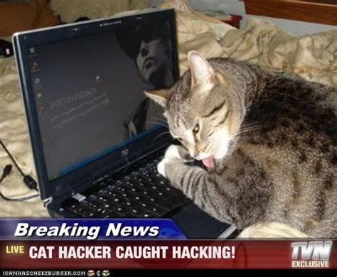 Cat Laptop Meme - 106 best computer cats images on pinterest funny cats