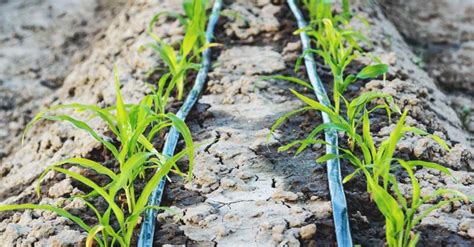 diy options   drip irrigation system  save
