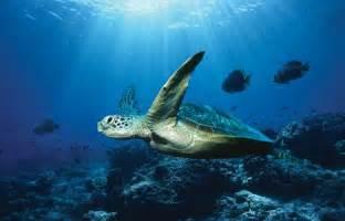 ocean conservancy reveals world s only snapshot of marine