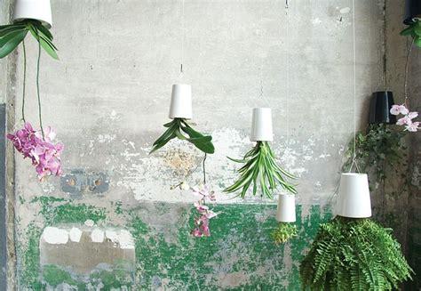 piante d arredamento oltre 25 fantastiche idee su arredamento piante da interni