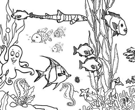 sea plants coloring pages www imgkid com the image kid
