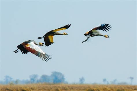 birding in africa we show you the hotspots for the best