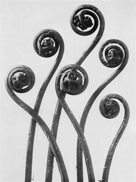 karl blossfeldt alphabet of the uncanny nature of fake flowers