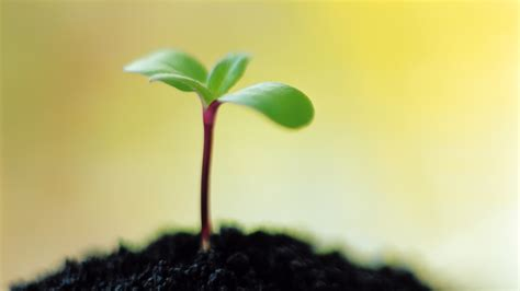 plant green shoots eye computer desktop wallpaper