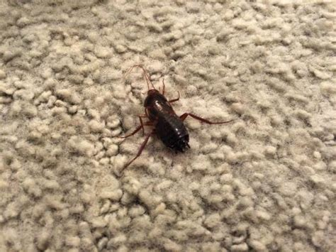 Bugs In A Rug bug on the rug picture of amargosa opera house and hotel valley junction tripadvisor