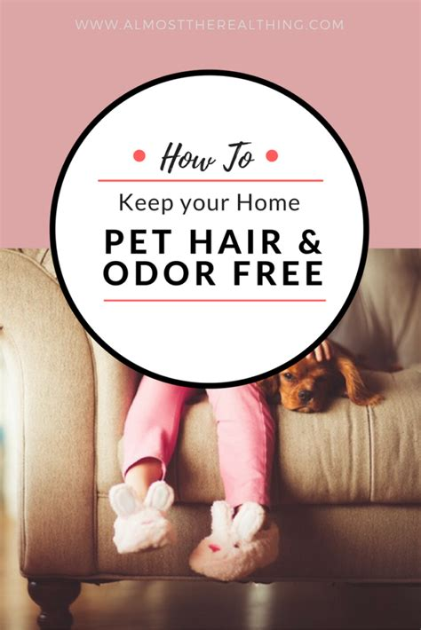 keep furniture pet hair odor free almost the real thing