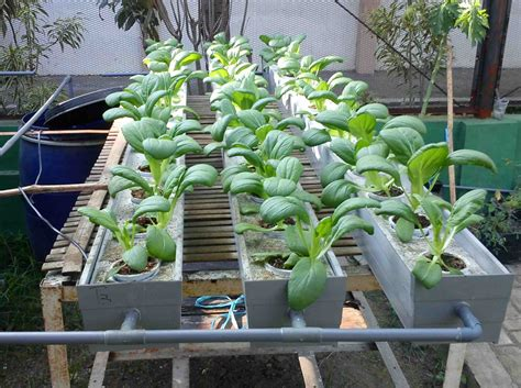 cara membuat nutrisi pupuk hidroponik membuat pupuk alternatif untuk hidroponik denbaguse