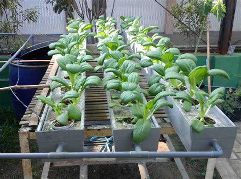 membuat nutrisi organik untuk hidroponik membuat pupuk alternatif untuk hidroponik denbaguse