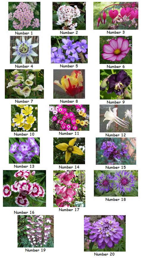 Our Plot At Green Lane Allotments Can You Identify These Identify Garden Flowers