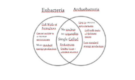 archaebacteria vs eubacteria venn diagram archaebacteria vs eubacteria www pixshark images