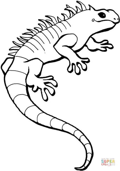green iguana coloring page iguana coloring page free printable coloring pages