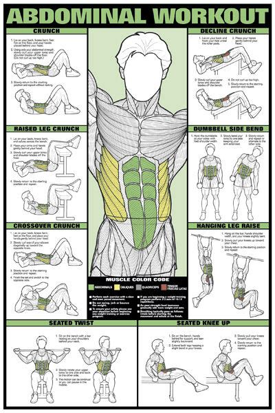 abdominal workout wall chart professional fitness training