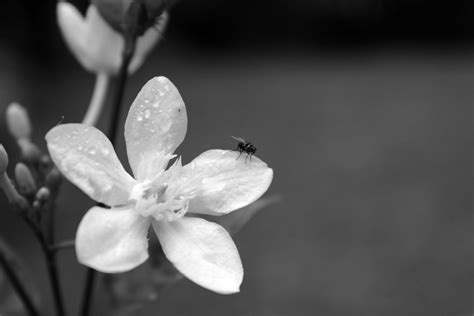 black and white flower background black and white flower backgrounds pictures to pin on