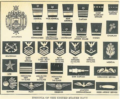 united states navy ranks dn navy rank bing images