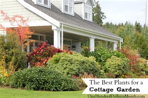 the best plants for a cottage garden one hundred dollars