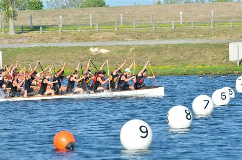 dragon boat racing pickering pickering rouge canoe club canoe kayak outrigger and