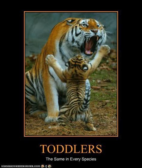 Funny Tiger Memes - the ish blog wordless wednesday just some funny stuff i