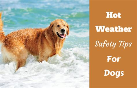 can a golden retriever live outside weather safety tips for dogs