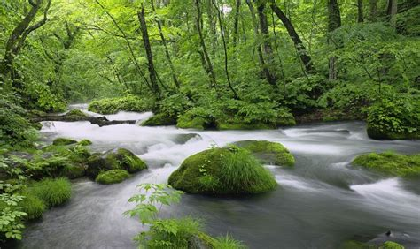 imagenes de paisajes que den paz paisaje de un r 237 o que inspira paz tranquilidad y