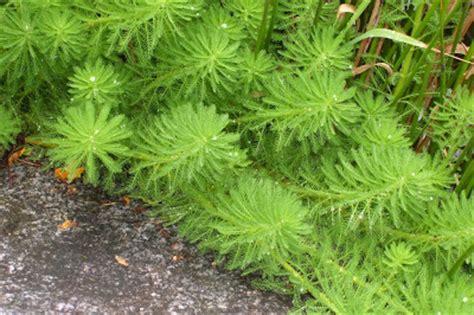 wanderin weeta with waterfowl and weeds like tiny
