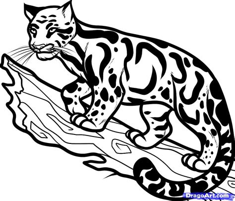 how to draw a clouded leopard clouded leopard step by
