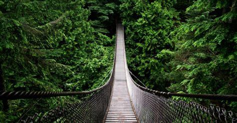 fakta menarik tentang amazon hutan hujan terbesar