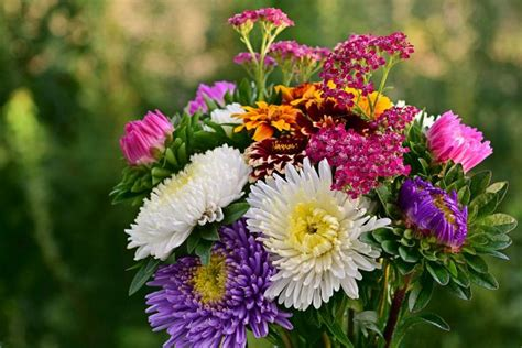 flower meanings symbolism  flowers herbs