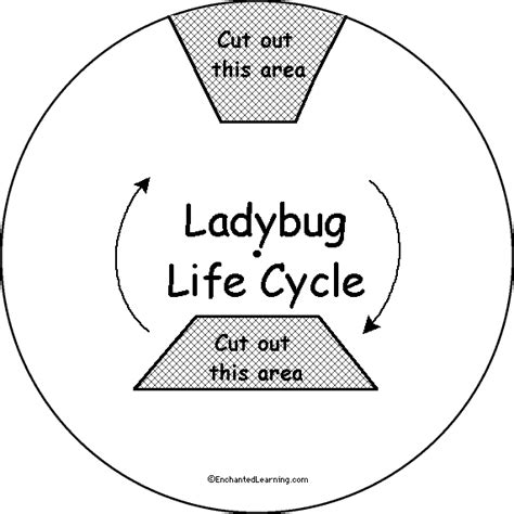 ladybug life cycle coloring page free coloring pages of snail lifecycle