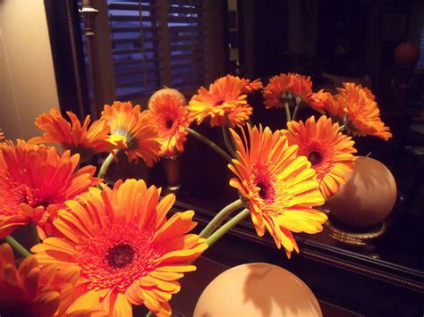 thinkin of home gerber daisy love thinkin of home gerber daisy love