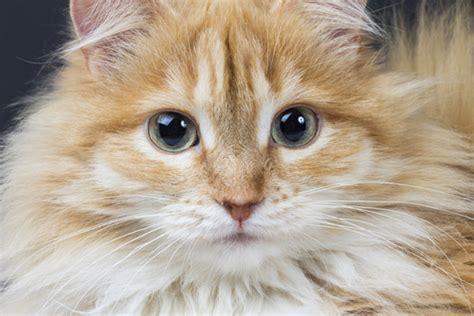 cat dander driverlayer search engine